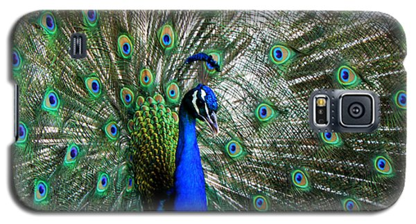 Proud Peacock Galaxy S5 Case by Laurel Powell
