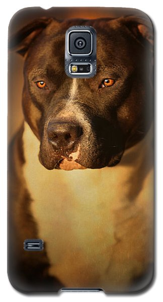 Bull Galaxy S5 Case - Proud Pit Bull by Larry Marshall