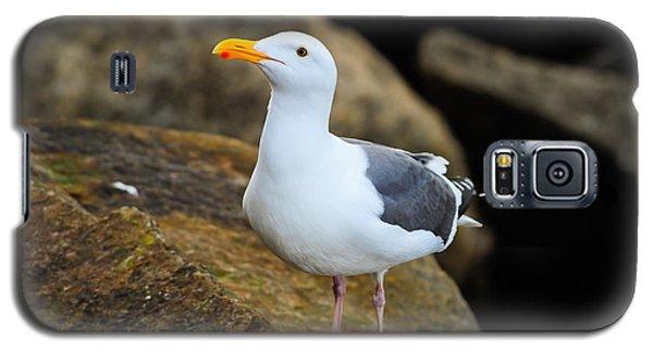 Proud Seagull Galaxy S5 Case