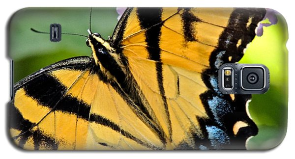 Proud Swallowtail Galaxy S5 Case by Eve Spring