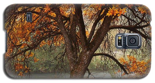 Provo Autumn #1 Galaxy S5 Case
