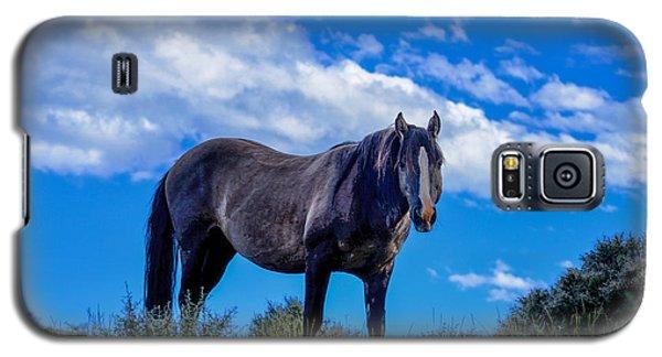 Pryor Mountain Wild Horse Galaxy S5 Case