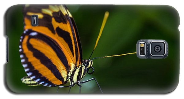 Galaxy S5 Case featuring the photograph Pteronymia Perched by Rhys Arithson