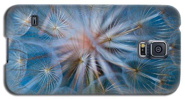 Puff-ball In Blue Galaxy S5 Case