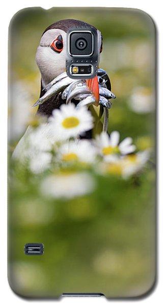 Puffin & Daisies Galaxy S5 Case