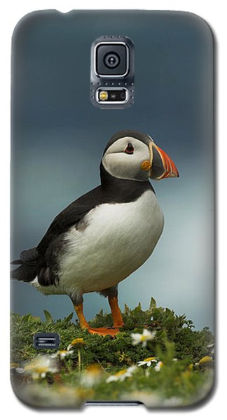 Puffin Galaxy S5 Case by Paul Scoullar
