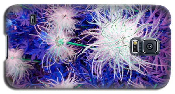 Pulsatilla Seed-head Galaxy S5 Case