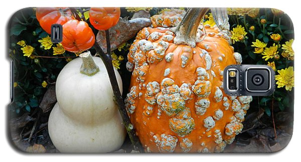 Pumpkin And Squash Galaxy S5 Case by Emmy Marie Vickers