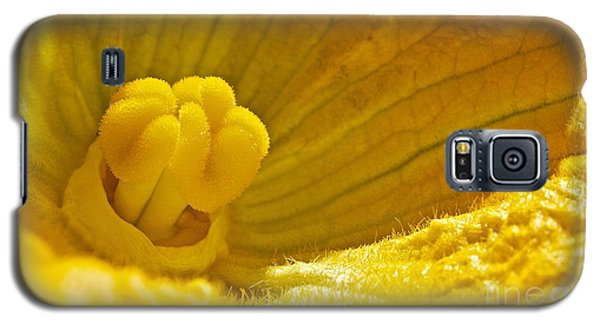 Galaxy S5 Case featuring the photograph Pumpkin Blossom by Linda Bianic