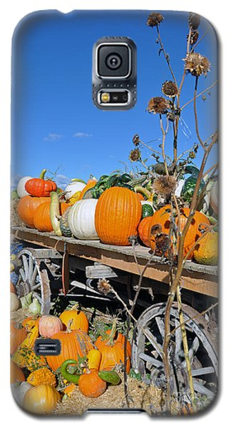 Pumpkin Farm Galaxy S5 Case by Minnie Lippiatt