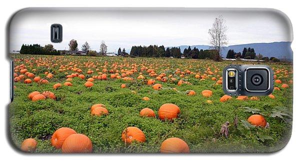 Pumpkin Field Galaxy S5 Case by Joyce Gebauer