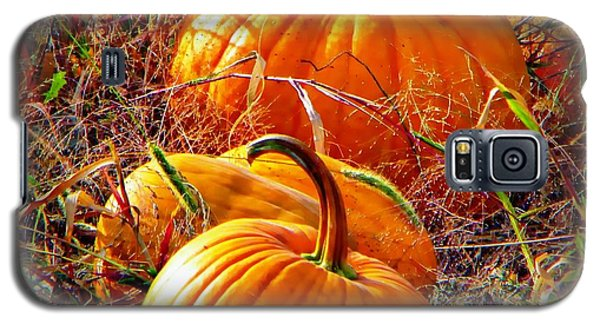 Pumpkin Patch Galaxy S5 Case by Michelle Frizzell-Thompson