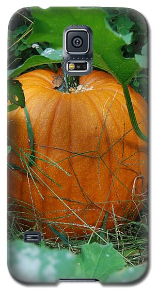 Galaxy S5 Case featuring the photograph Pumpkin Patch by Ramona Whiteaker