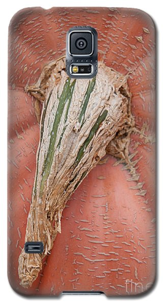 Pumpkin Stem Galaxy S5 Case