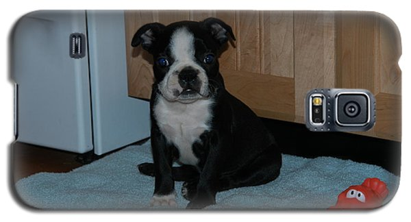 Puppy Boston Terrier And Toy Galaxy S5 Case by Donald Williams