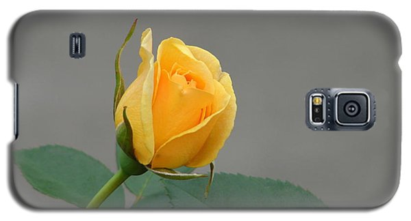 Galaxy S5 Case featuring the photograph Pure Gold by Lew Davis