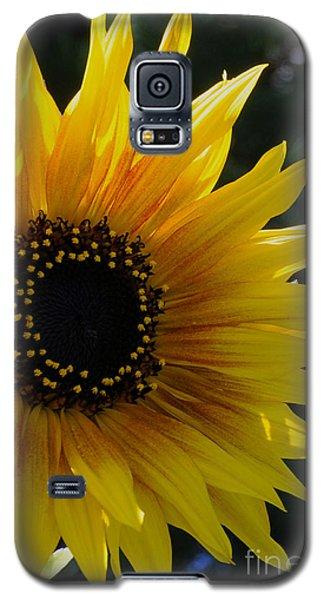 Pure Sunshine Galaxy S5 Case