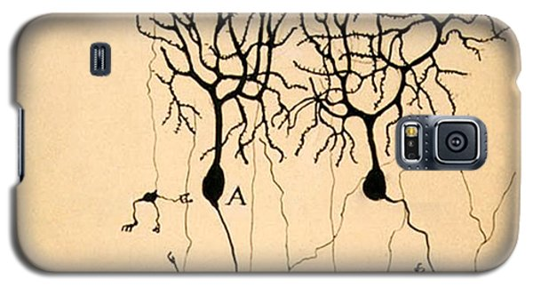Purkinje Cells By Cajal 1899 Galaxy S5 Case by Science Source