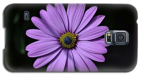 Purple African Daisy Galaxy S5 Case