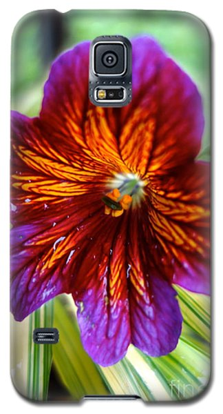 Purple And Orange Galaxy S5 Case