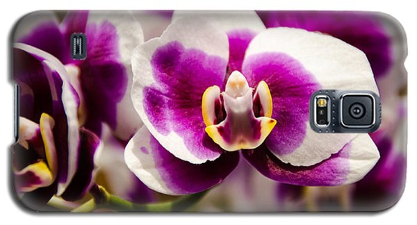 Galaxy S5 Case featuring the photograph Purple Beauty by Penny Lisowski