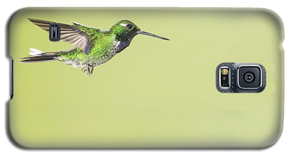 Purple-bibbed White-tip Hummingbird Galaxy S5 Case