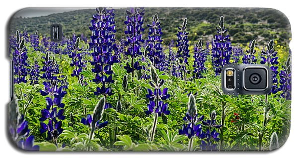 Purple Blossom Galaxy S5 Case by Uri Baruch