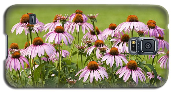 Purple Cone Flowers Galaxy S5 Case