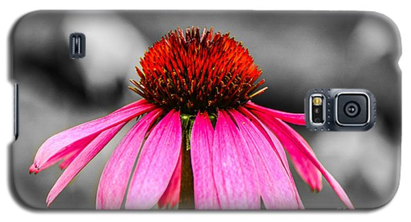 Purple Coneflower - Sc Galaxy S5 Case