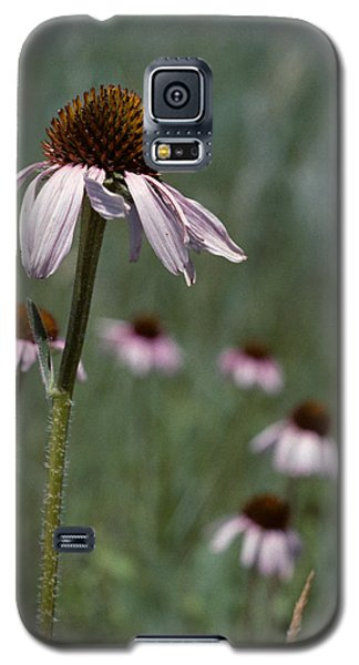 Purple Coneflower Galaxy S5 Case