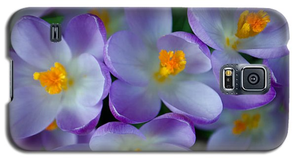 Purple Crocus Gems Galaxy S5 Case by Tikvah's Hope