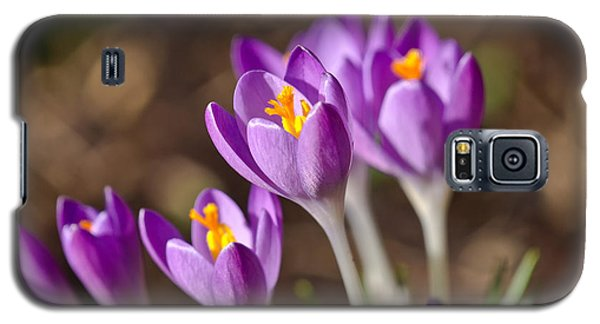 Purple Crocus Galaxy S5 Case by Scott Carruthers