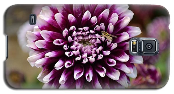 Purple Dahlia White Tips Galaxy S5 Case