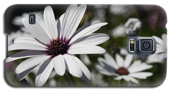 Purple Daisies 2 Galaxy S5 Case