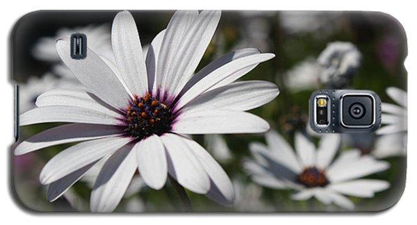 Purple Daisies 2 Galaxy S5 Case