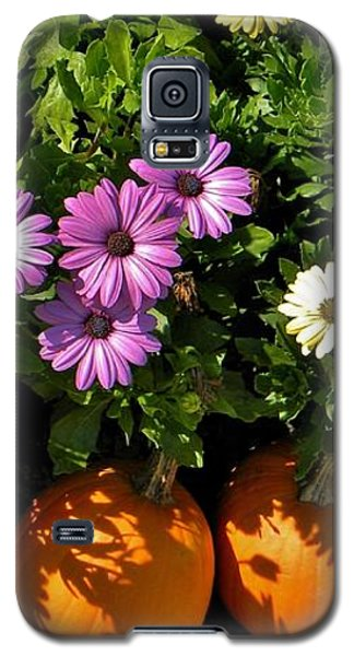 Purple Daisies And A Touch Of Orange Galaxy S5 Case