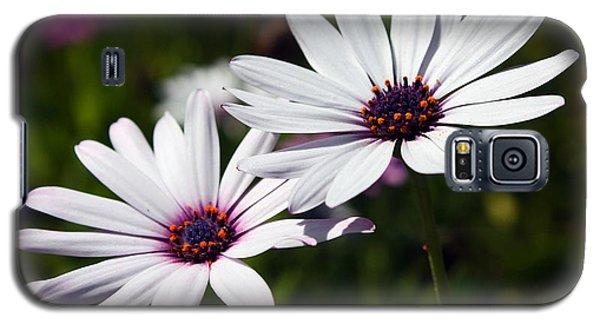 Purple Daisies Galaxy S5 Case