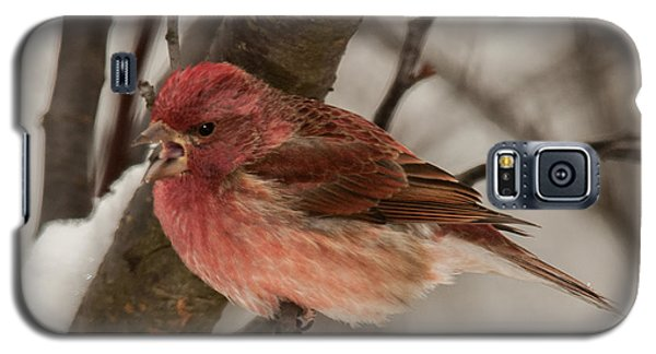 Galaxy S5 Case featuring the photograph Purple Finch Bird Song by Lara Ellis