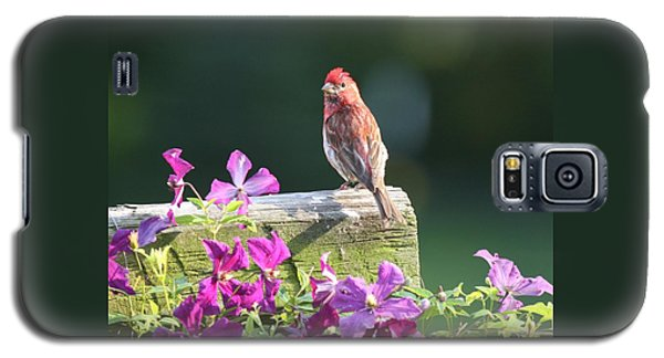 Purple Finch By Clematis Galaxy S5 Case by Lucinda VanVleck