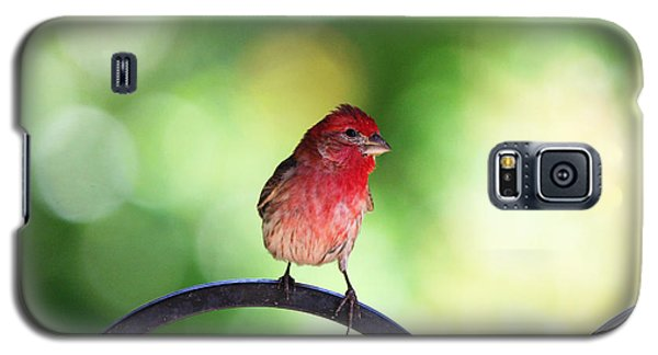 Galaxy S5 Case featuring the photograph Purple Finch by Trina  Ansel