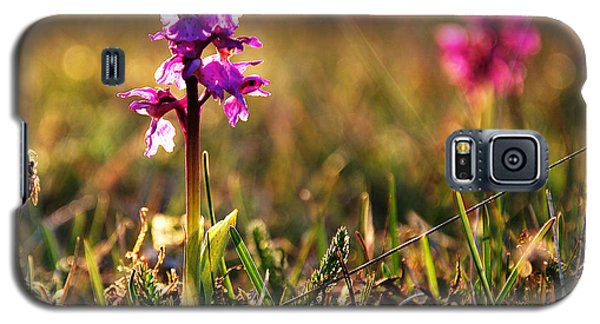 Galaxy S5 Case featuring the photograph Purple Flower In Back Light by Kennerth and Birgitta Kullman