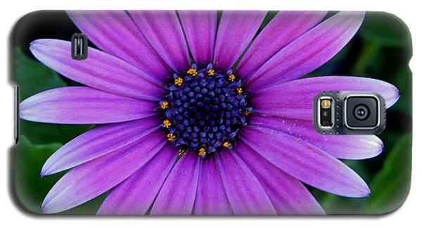 Purple Flower Galaxy S5 Case by Pamela Walton