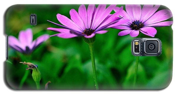 Galaxy S5 Case featuring the photograph Purple Flowers by Joe  Ng