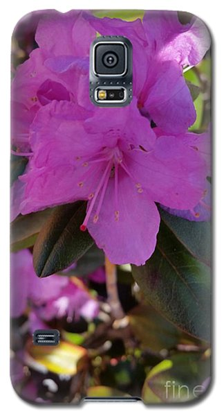 Galaxy S5 Case featuring the photograph Purple Flowers by Rose Wang