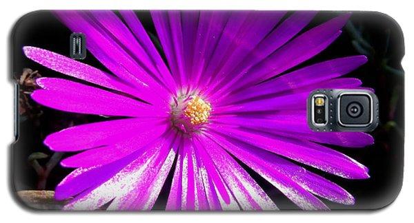 Purple Glow Galaxy S5 Case by Pamela Walton