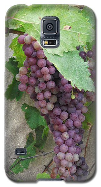 Purple Grapes On The Vine Galaxy S5 Case