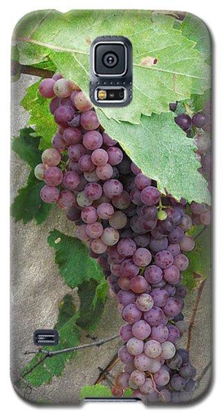 Purple Grapes On The Vine Galaxy S5 Case by Jayne Wilson