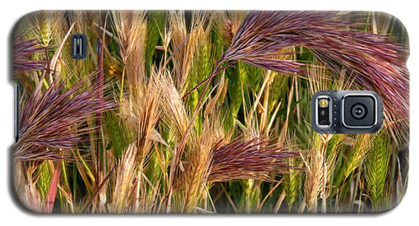 Purple Grasses Galaxy S5 Case
