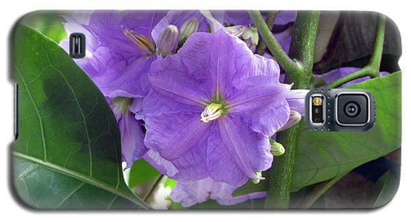 Purple Hearts Galaxy S5 Case by Debi Singer