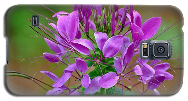 Galaxy S5 Case featuring the photograph Purple Lilly by Jodi Terracina
